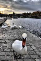 November in Prague by tomsumartin