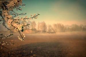 Kouzlo jara by tomsumartin