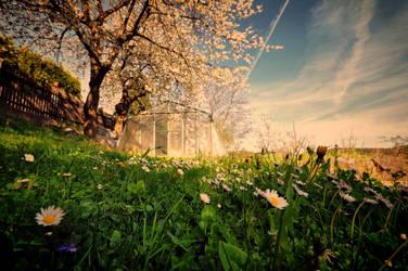 I love Spring II by tomsumartin