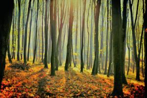 Podzimni sen by tomsumartin