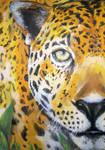 Leopardo by JLRincon