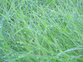 Dew on the grass by acg723