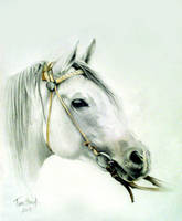 White Horse by tactouc