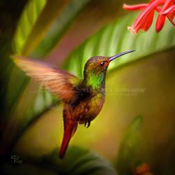Colibri by Taurina
