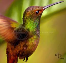 Colibri Detail by Taurina
