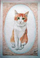 Portrait of my cat by bogatyrkhan