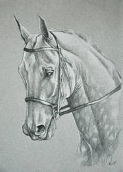 Connemara by NutLu