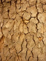 Tree texture by BlackHeresy