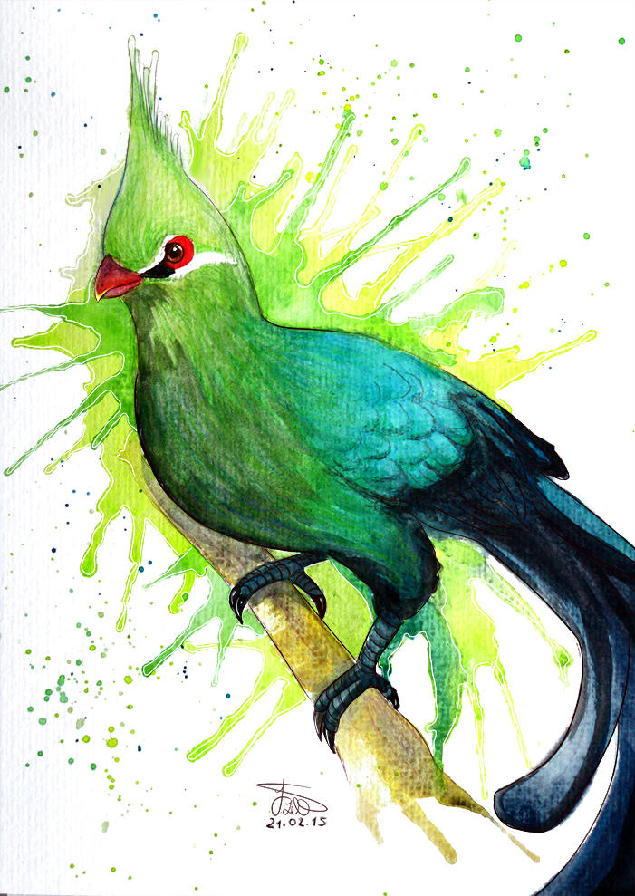 Guinea Turaco by whitecrestwaves