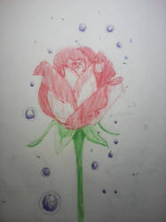 Tranquil Rose by JnJrz