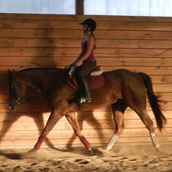 AQHA Hunter Under Saddle by Disneyhorse