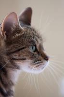 Portrait of a cat 2 by jo-i