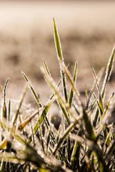 Grassland chant by jo-i