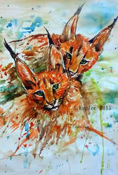 Caracals by Tirana-Weaving