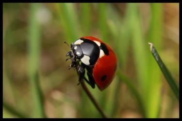 Lady bug II by aquila92