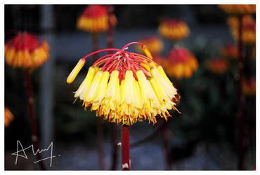 Bohanicals by sunquai