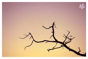 Natural Simplicity by sunquai