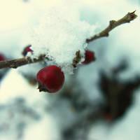 Season of calm love by Hishino