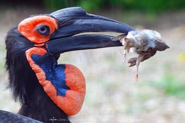 raven by red-FeNIks