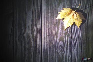 Lonely leaf by ShamenSnC