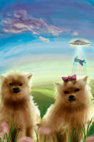 Pomeranian Puppies by danzr4ever