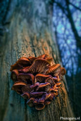 Mushrooms by carlosnr1