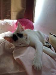 Sleepy Kitty by kitten-Red