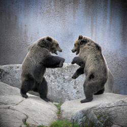 Kung-fu bears by busangane