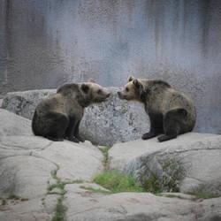 Bears by busangane