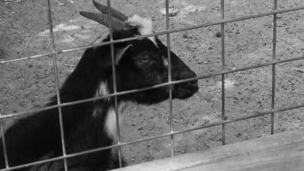 goat by CorpseMonkey