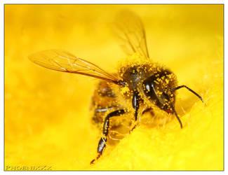 Macro bee 2 by PhoenixXx69