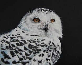 Snowy Owl by CrucioCurse