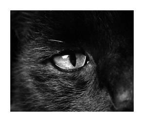 Simon - The Cat by Noergaard