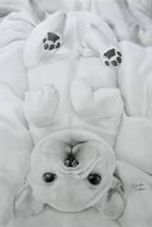Cute French Bulldog  Puppy by poisondanny