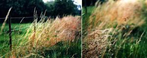 grazing fields 2 by kitleen