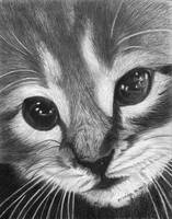 Meow! by tintin33