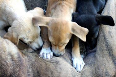 puppies by judiRth