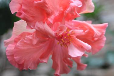 pinkish by judiRth
