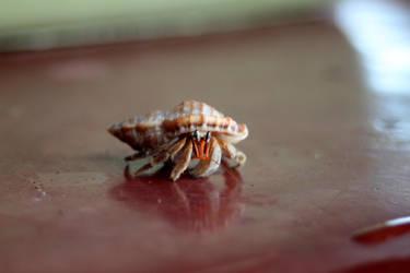 hermit crab by judiRth