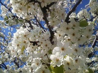 Full bloom by Fire-Aqua-Stars97