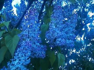 Single purple by Fire-Aqua-Stars97