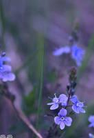 flower by bezag
