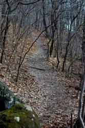 Winding Trails by Philzang
