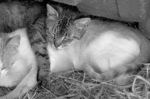 Cat Nap by Philzang