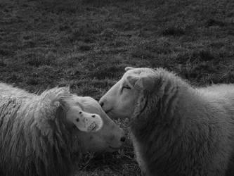 Dessine moi un mouton... by OrianaDreams