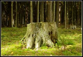 Forest 2010 by batjenka