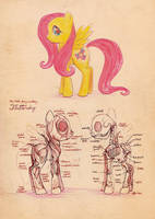 anatomy of a fluttershy by CosmicUnicorn
