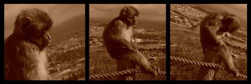 123...Monkey by ShadowsBlood