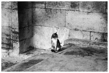 Cat by fredl