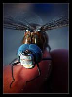 Anisoptera by pleautaud